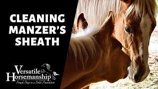 CLEANING MANZER'S SHEATH (has he dropped yet?) // Versatile Horsemanship