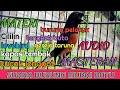 Suara Masteran Burung Murai Batu Part  Mp3 - Mp4 Download