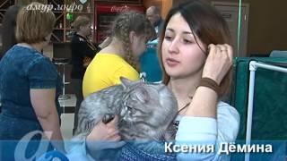 В Благовещенске проходит двухдневная выставка кошек, приуроченная ко Дню защитника ...
