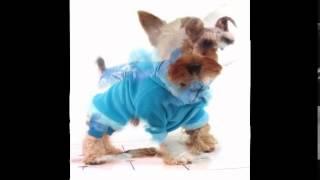 одежда для собак минск недорого