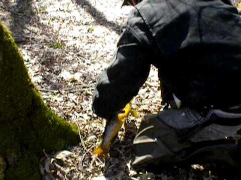 Trout fishing cincinnati creek in oneida county new york for Fishing in cincinnati