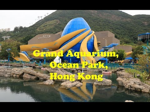 A Visit to Grand Aquarium, Ocean Park, Hong Kong - YouTube 8dae09f911fb