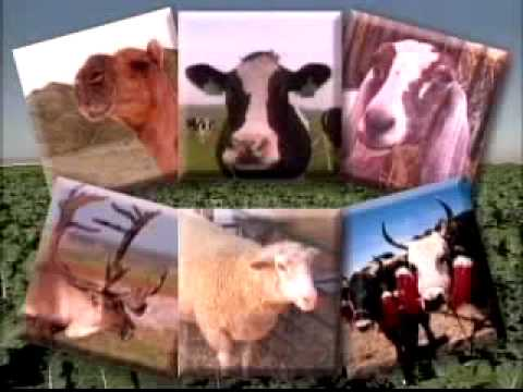 Farm to Market: Dairy (clips)
