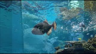かごしま水族館で