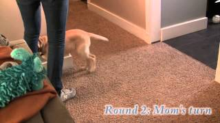 Teach Your Puppy To Take Treats Nicely & Respect Boundaries 2 Of 2