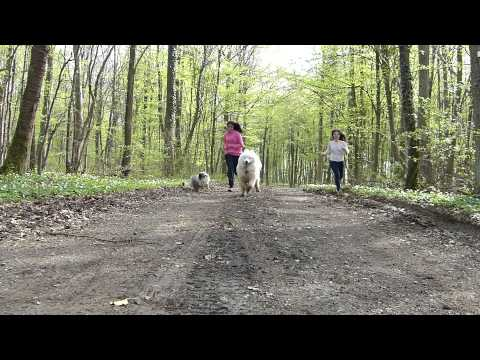 ~ Amazing Dog tricks And Fun ~  'With Marnie & Vasko.. ♥'
