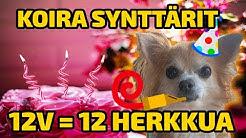 KOIRA SYNTTÄRIT - ONNIMANNI 12V = 12 HERKKUA!