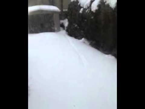 Snow snakes?