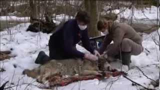 Tschernobyl - Die Natur erobert die Sperrzone zurück 2011
