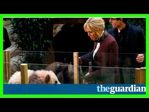 Panda cub growls and jumps at france's first lady, brigitte macron – video