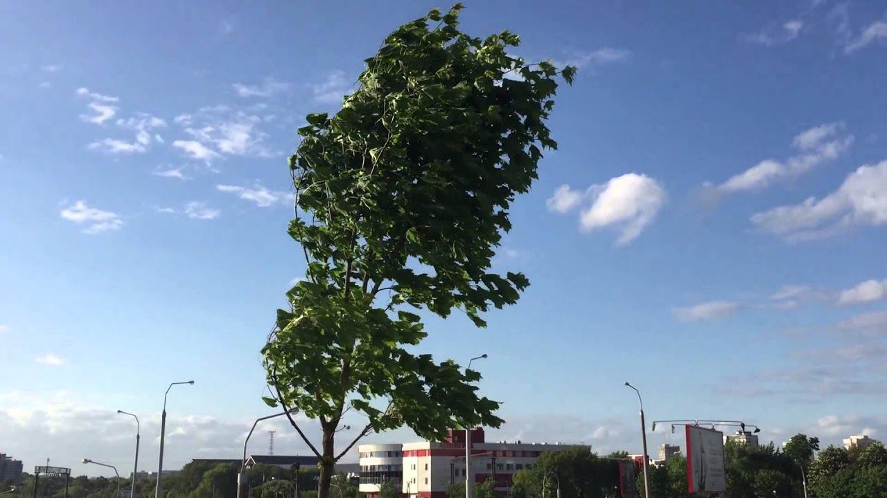 Одинокое дерево, качающееся на ветру - YouTube