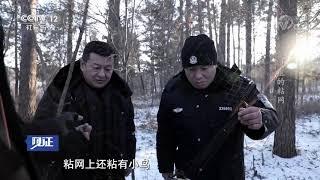 《见证》 20190614 绿剑行动II(四) 深山里的粘网| CCTV社会与法