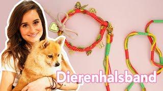 Dierenhalsband voor dierendag- DIY | Jill