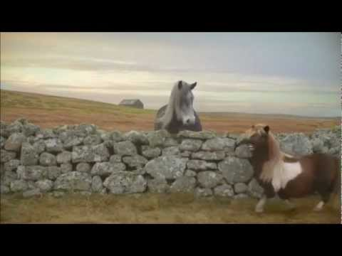 three---the-pony-[goat-edition]