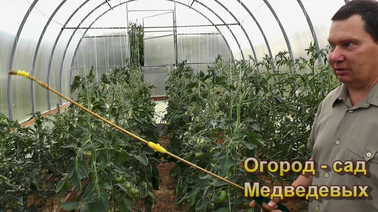 Как подобрать подкормки во время плодоношения томатов