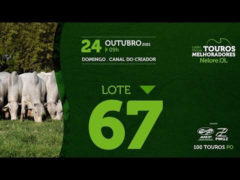 LOTE 67 - LEILÃO VIRTUAL DE TOUROS MELHORADORES  - NELORE OL - PO 2021