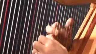 Daily Harp Moments-Pajaro Campana-The Bell Bird