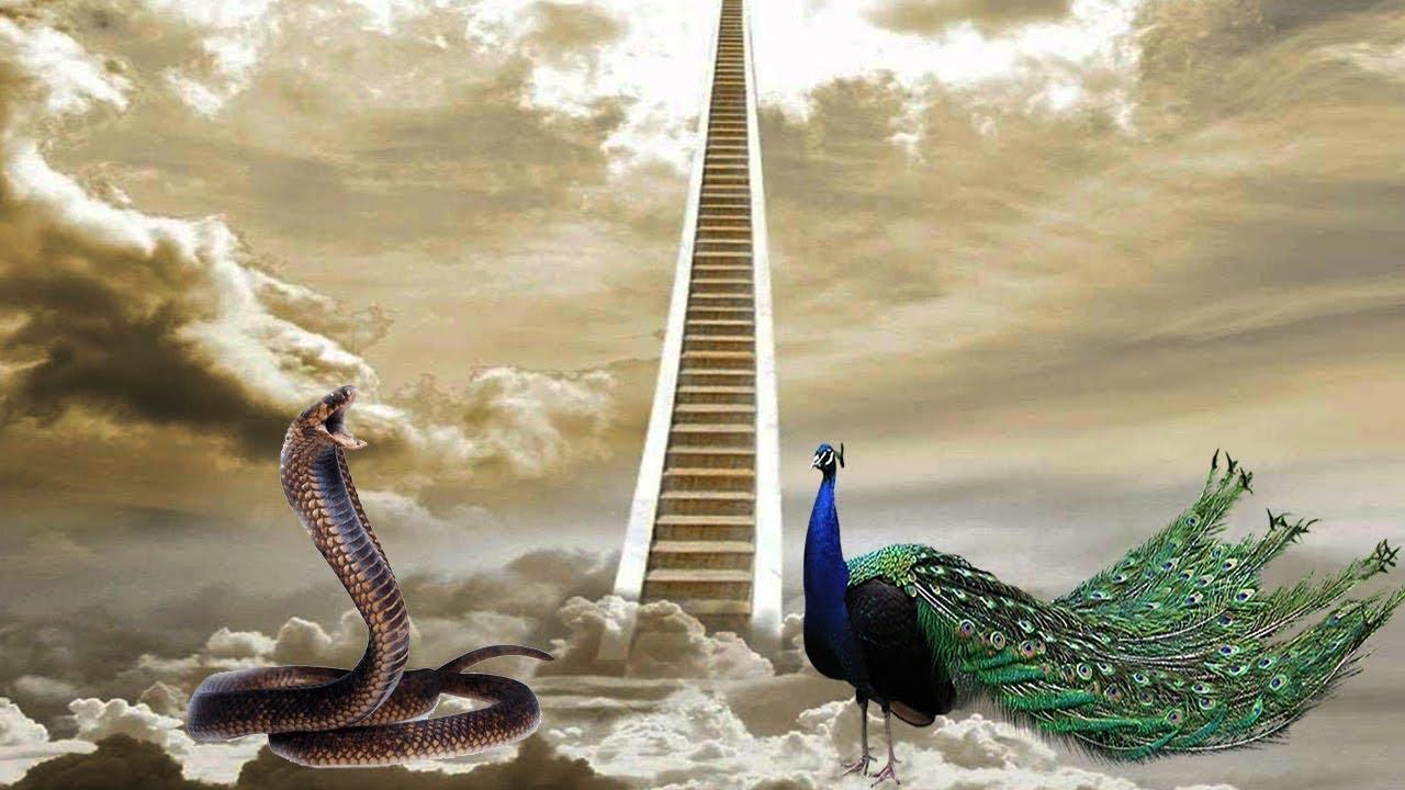 لماذا طرد الله تعالى الثعبان وطائر الطاووس من الجنة ؟!