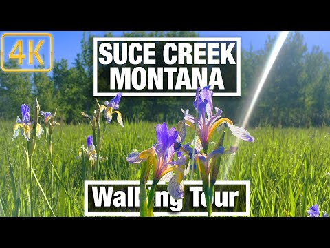 4K City Walks Montana Suce Creek Trail Near Livingston Virtual Walking Trails for Treadmill