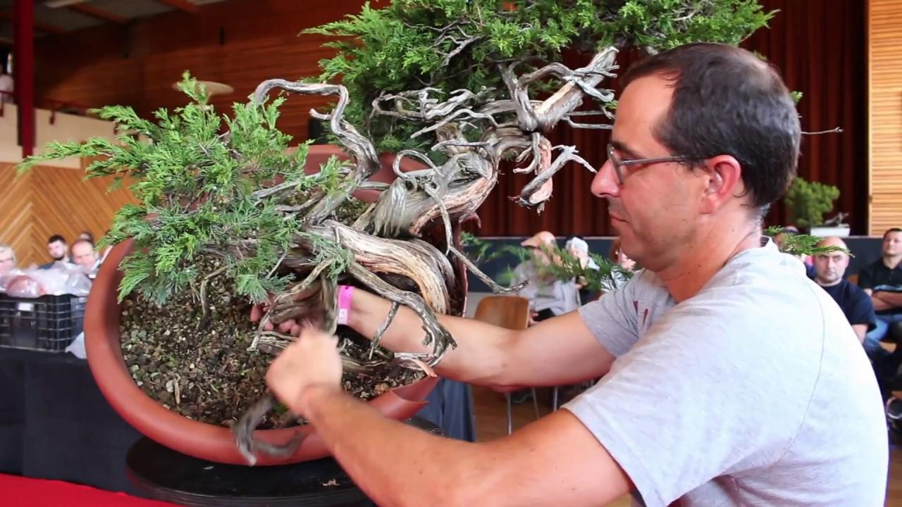 Juniper Bonsai Demo By David Benavente Youtube