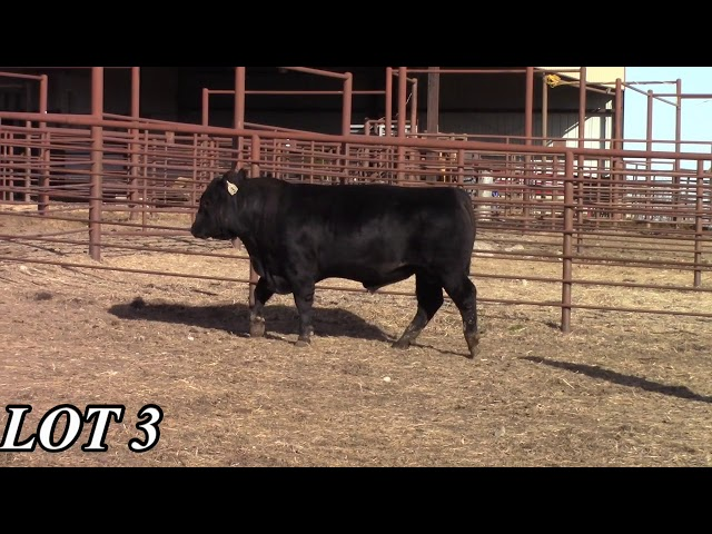 Mead Angus Farms Lot 3