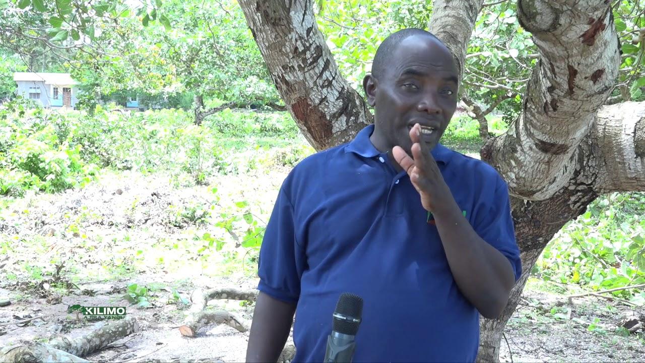 Download KILIMO AJIRA YANGU - Shule ya Mnyawi yanufaika na kilimo cha Korosho 06.03.2021