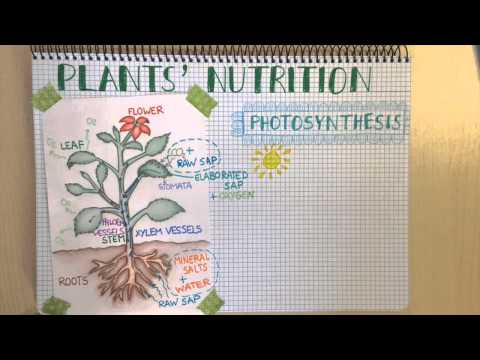 Plant Nutrition. Natural Science for Primary Education