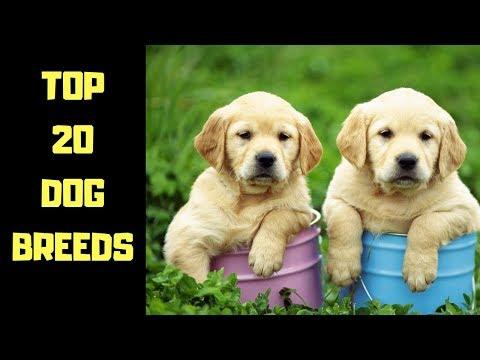 Top 20 Dog Breeds