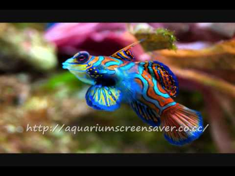 Aquarium Screensavers For Free Download, Enjoy!
