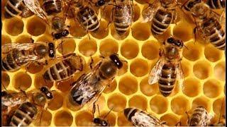 Грызут ли пчёлы пенопласт или делаю корпус из сендвич-панели 32 мм.