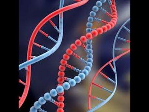 Репликация ДНК - YouTube Репликация ДНК Анимация