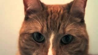 Музыкальный клип с кошаками
