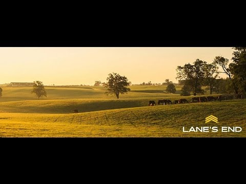 Lane's End Farm, Versailles; Kentucky