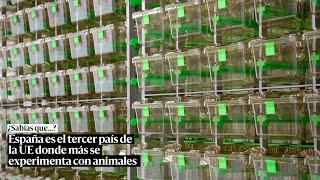 España es el tercer país de la UE que más experimenta con animales