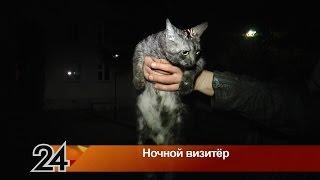 Нетрезвый мужчина пытался ночью пристроить бездомную кошку в хорошие руки