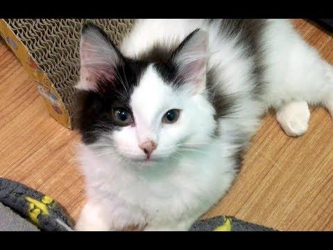 new-super-fluffy-kitten,-partnerships-&-luna's-getting-braver