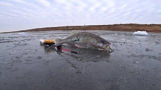 БЕРШ на малька с ОДНОЙ лунки Берш зимой Зимняя рыбалка 2021