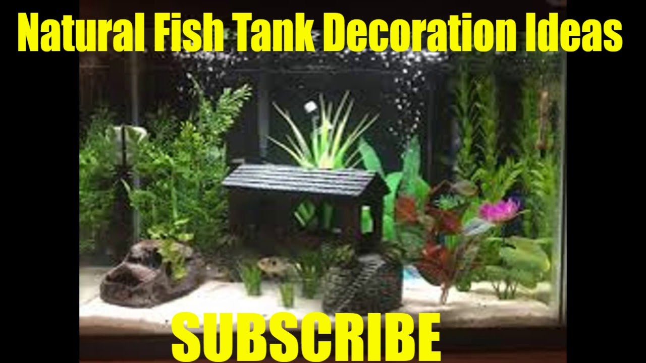 Natural fish tank decoration ideas youtube for How to decorate fish tank