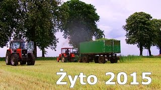 Żyto na Kiszonke 2015 - Ursus C-360/904/912/1224 |MF 699| Claas Jaguar 840/ Orkan/ HL