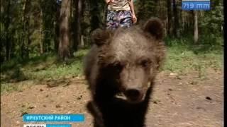 Дикие животные Сибири всё чаще выходят к людям. В чём причина?, «Вести-Иркутск»