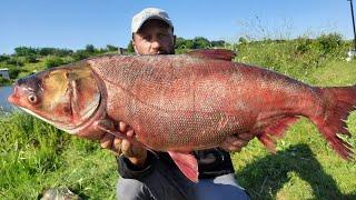 ОГРОМНЫЕ ТОЛСТОЛОБЫ ТОРПЕДЫ РВУТ ЛЕСКУ Ловля толстолоба рыбалка на толстолобика снасть на толстолоб