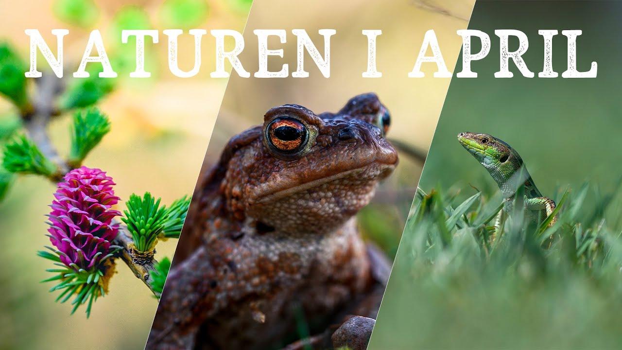 De 3 bedste naturoplevelser i April