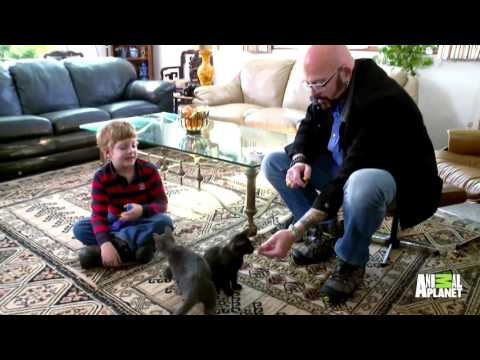 Training Your Cat Is Easy With This Clever Method From Jackson Galaxy!