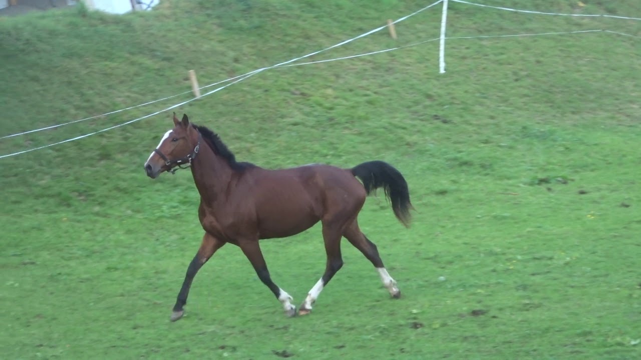Spiel Pferde