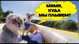 С котом вход разрешен! На лодочке Кевин и Билли Бой | путешествие с котом и псом