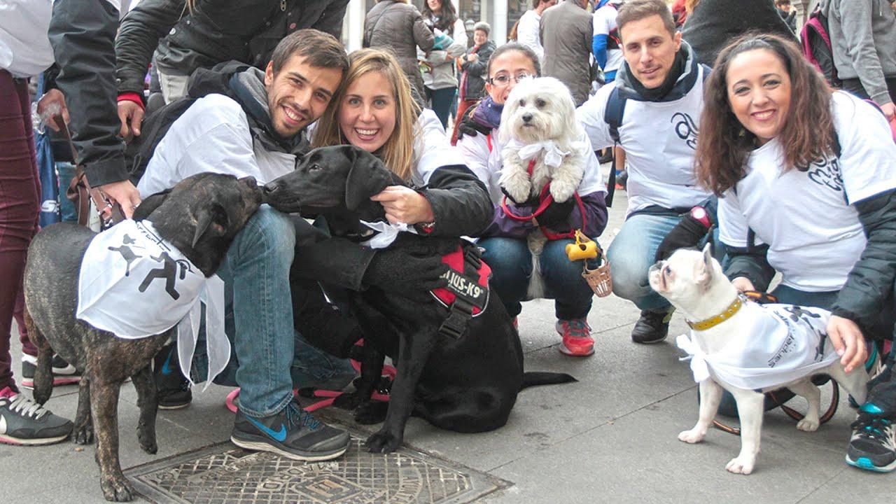 Un millar de personas con sus perros hoy en la sanperrrestre en la cibeles madrid youtube - Animales con personas apareandose ...