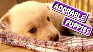 Puppy Playing | Cute Animal | Cute Dogs and Cats