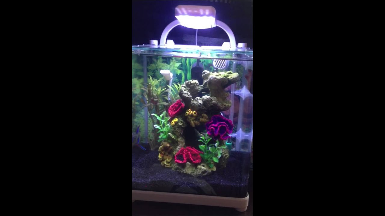 Betta and tetra neon fish aquarium set up youtube for Neon fish tank
