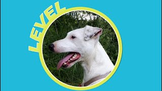 Level the Parson Russell Terrier & the Xiaomi M365