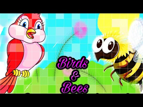 Birds And Bees Explained Correctly